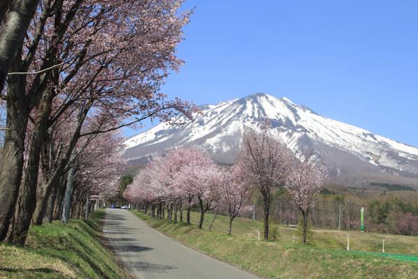 岩木山「世界一の桜並木」