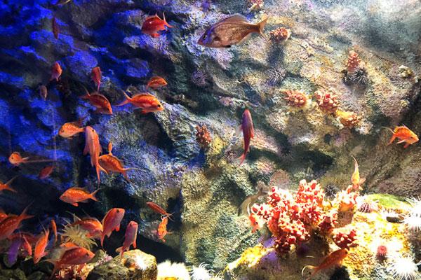 仙台海之森水族馆