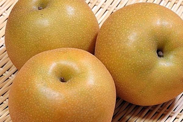 千葉県の梨