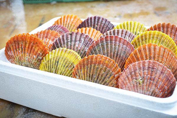 ヒオウギ貝
