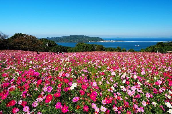 花の楽園「能古島」