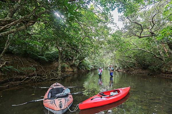 红树林皮划艇