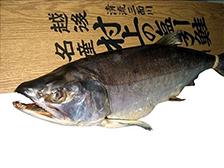 越後村上塩引鮭